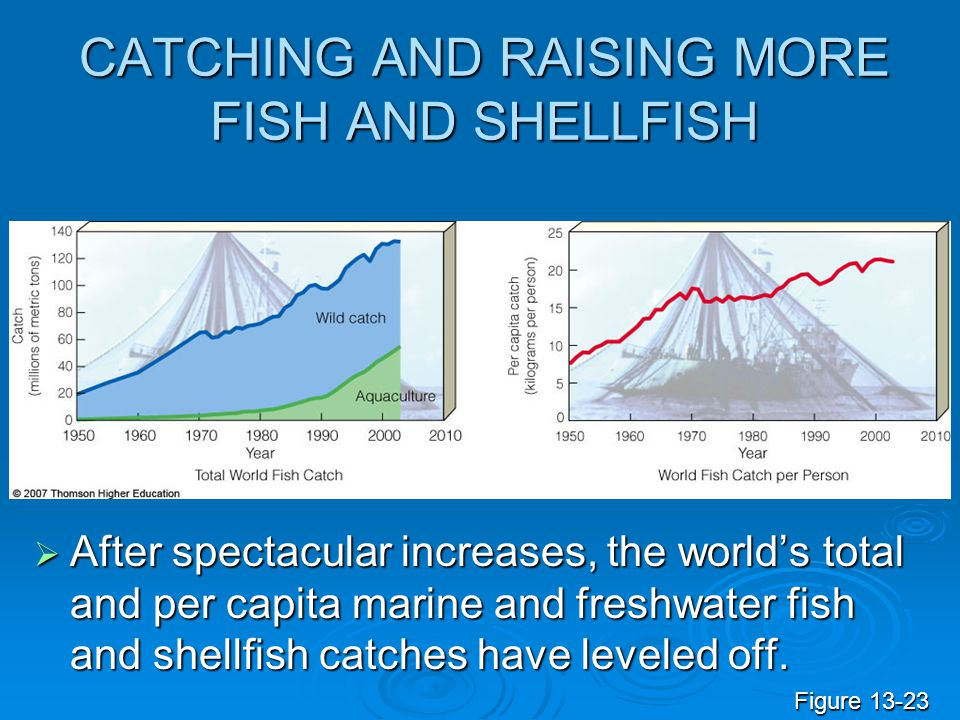 CATCHING AND RAISING MORE FISH AND SHELLFISH