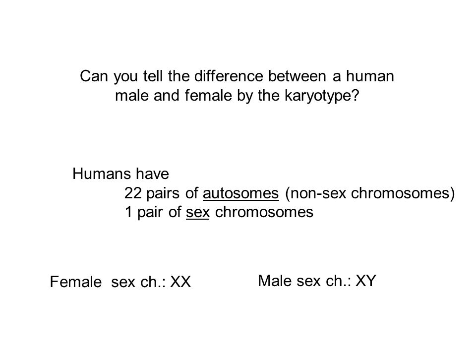 Can you tell the difference between a human male and female by the karyotype