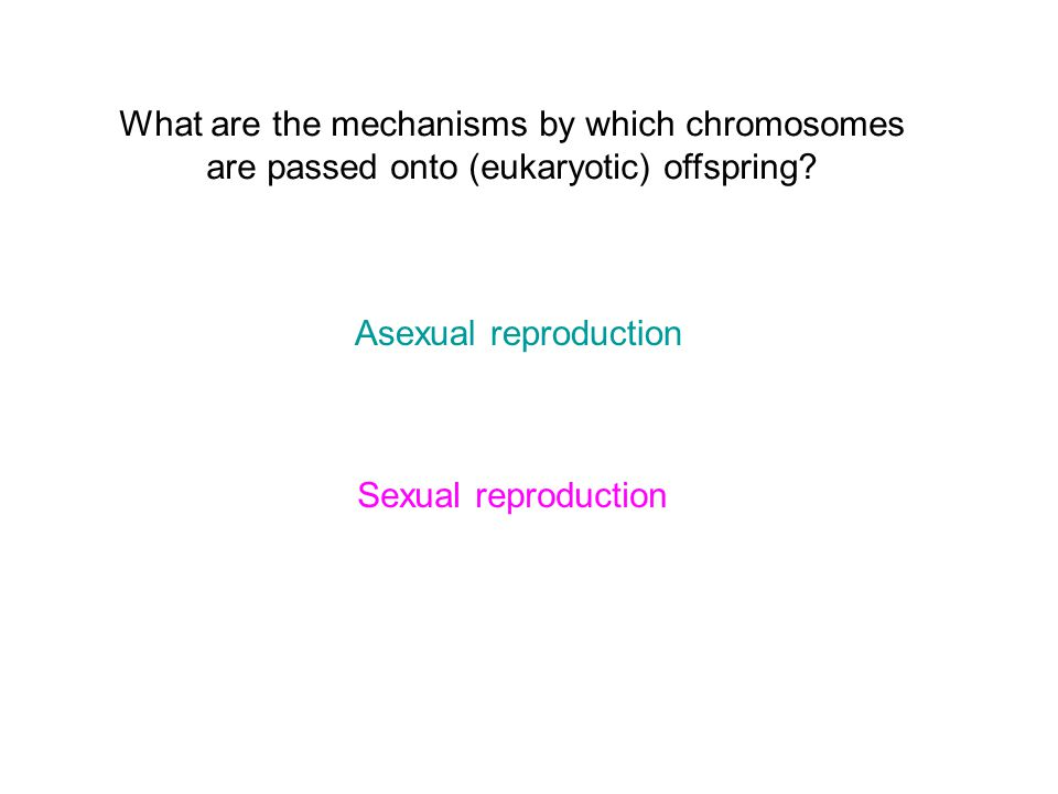 What are the mechanisms by which chromosomes are passed onto (eukaryotic) offspring