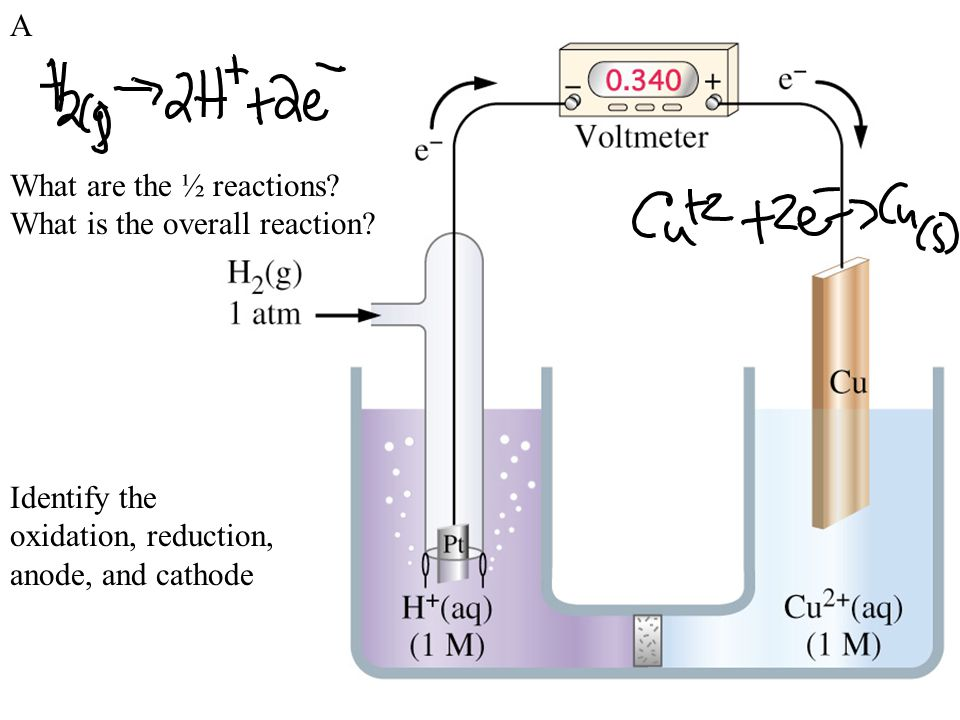 A What are the ½ reactions