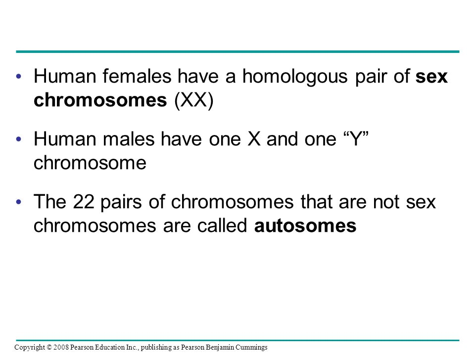 Human females have a homologous pair of sex chromosomes (XX)