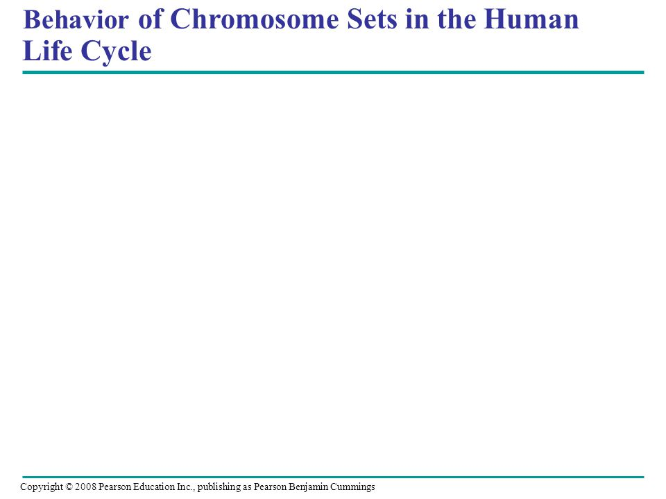 Behavior of Chromosome Sets in the Human Life Cycle