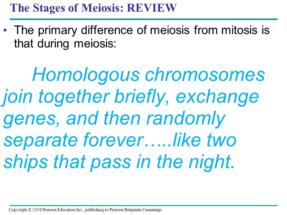 The Stages of Meiosis: REVIEW