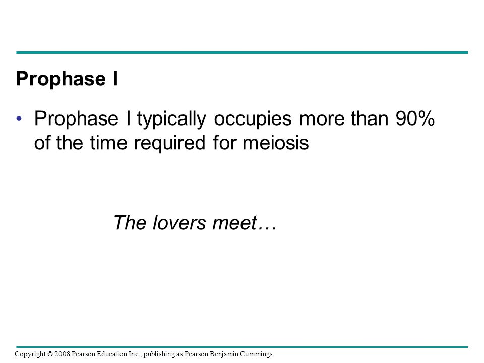 Prophase I Prophase I typically occupies more than 90% of the time required for meiosis. The lovers meet…