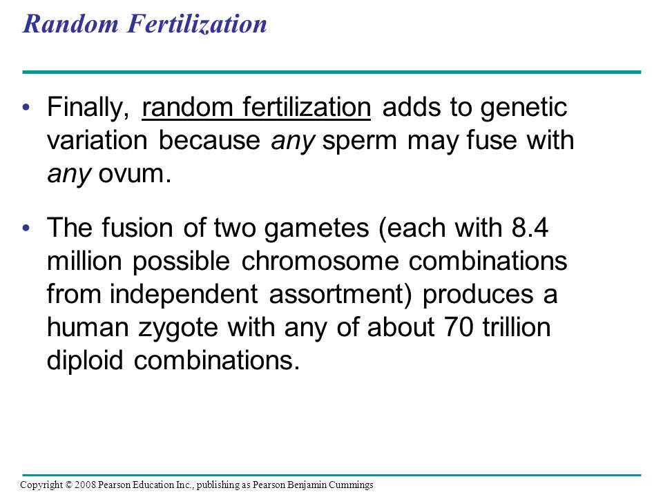 Random Fertilization Finally, random fertilization adds to genetic variation because any sperm may fuse with any ovum.
