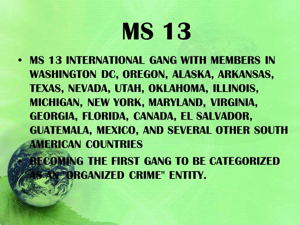 MS 13