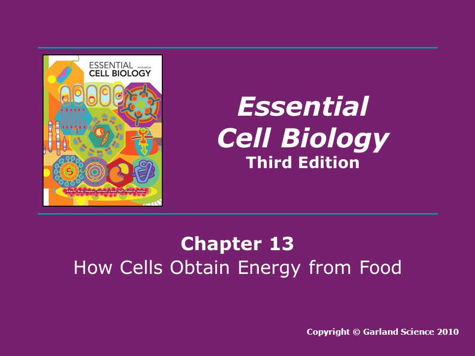 How Cells Obtain Energy from Food
