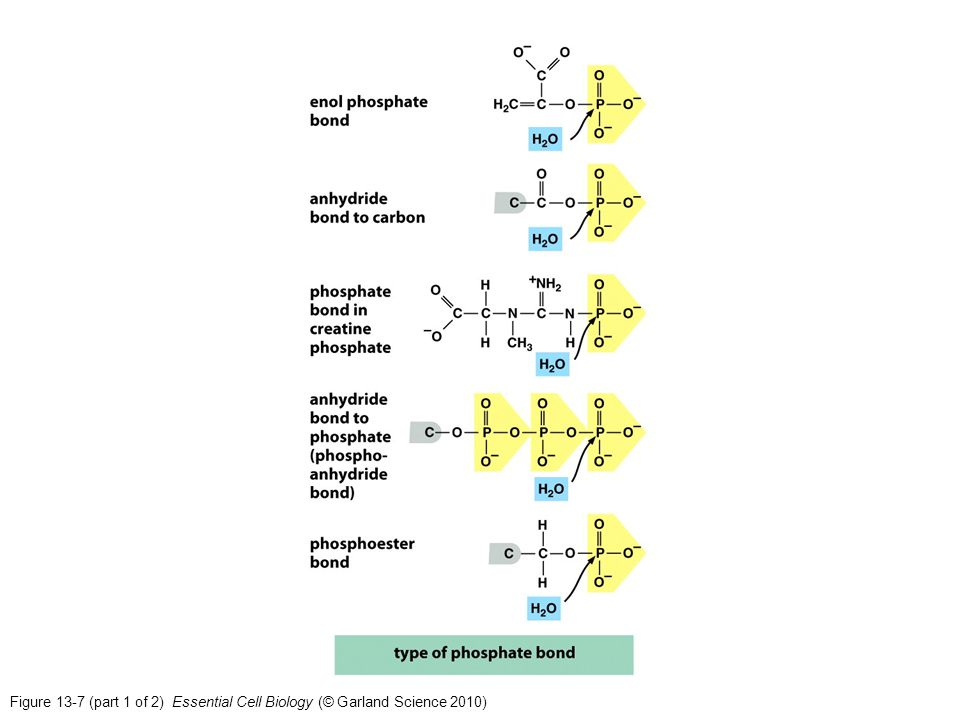 Figure 13-7 (part 1 of 2) Essential Cell Biology (© Garland Science 2010)