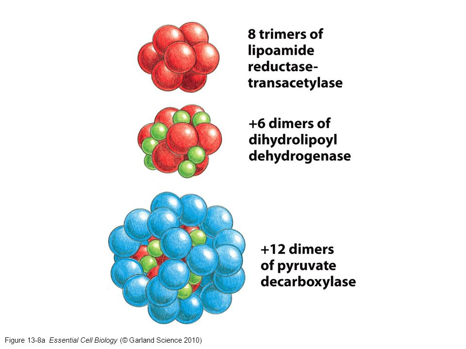 Figure 13-8a Essential Cell Biology (© Garland Science 2010)