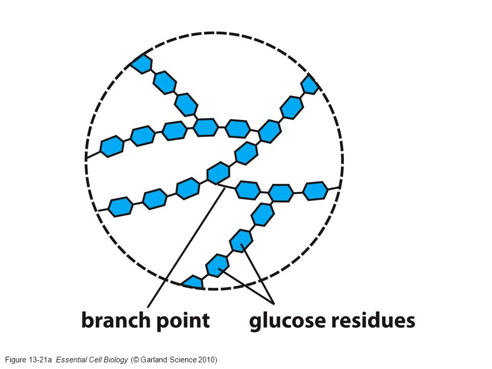 Figure 13-21a Essential Cell Biology (© Garland Science 2010)