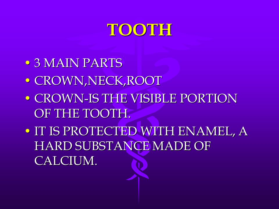 TOOTH 3 MAIN PARTS CROWN,NECK,ROOT
