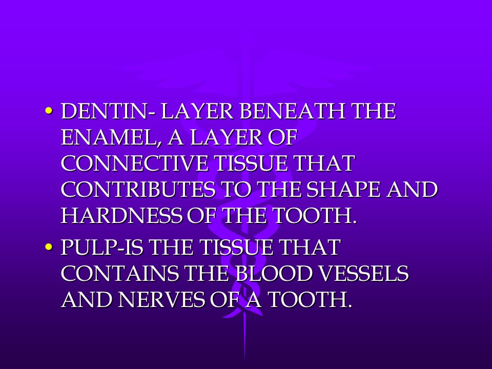 DENTIN- LAYER BENEATH THE ENAMEL, A LAYER OF CONNECTIVE TISSUE THAT CONTRIBUTES TO THE SHAPE AND HARDNESS OF THE TOOTH.