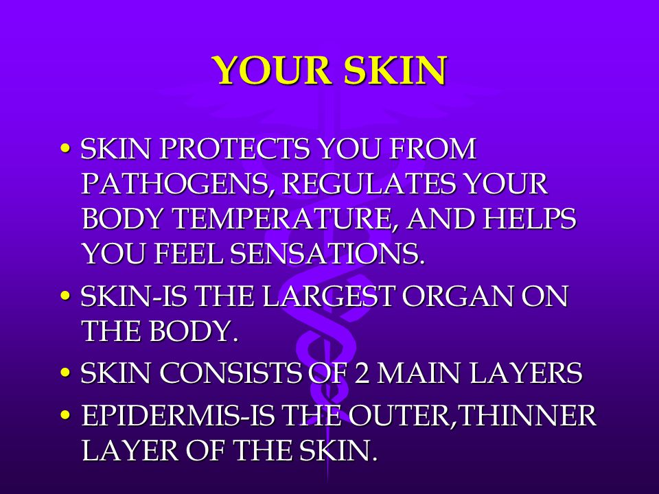 YOUR SKIN SKIN PROTECTS YOU FROM PATHOGENS, REGULATES YOUR BODY TEMPERATURE, AND HELPS YOU FEEL SENSATIONS.