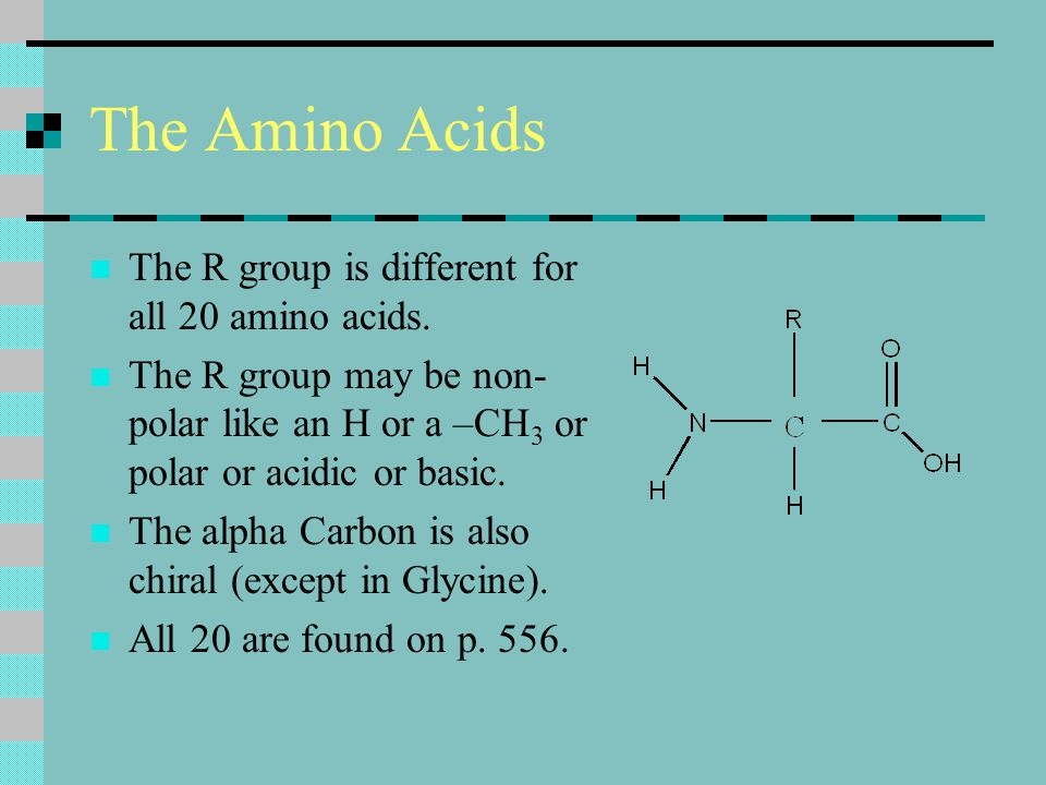 The Amino Acids The R group is different for all 20 amino acids.