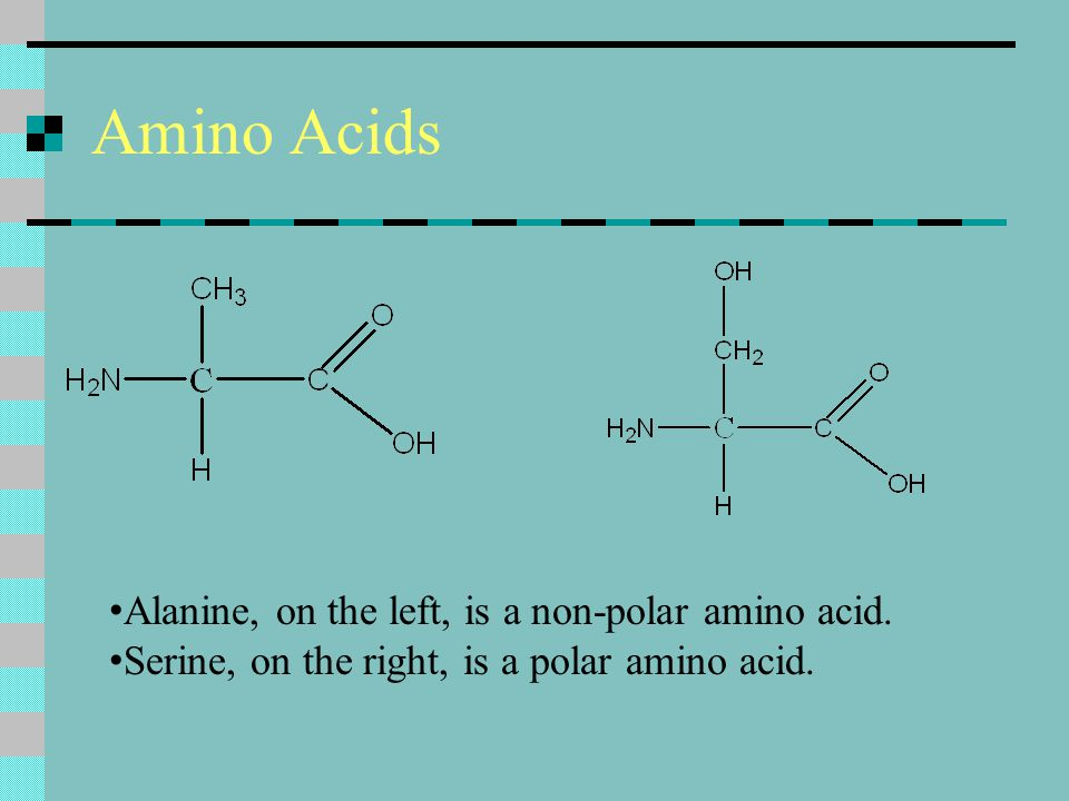 Amino Acids Alanine, on the left, is a non-polar amino acid.