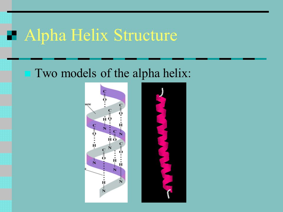 Alpha Helix Structure Two models of the alpha helix: