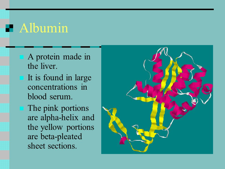 Albumin A protein made in the liver.