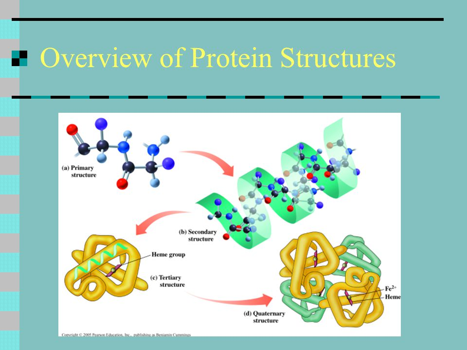Overview of Protein Structures
