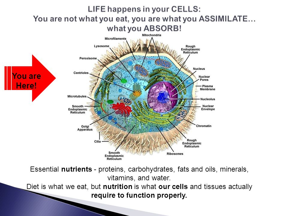 LIFE happens in your CELLS: You are not what you eat, you are what you ASSIMILATE… what you ABSORB!