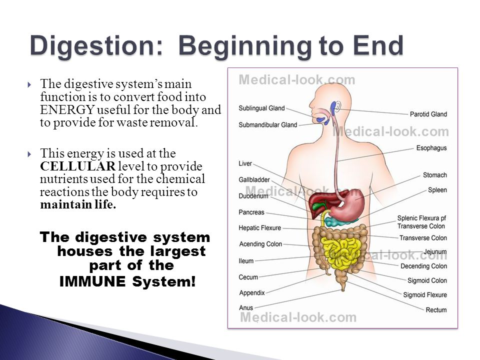 Digestion: Beginning to End