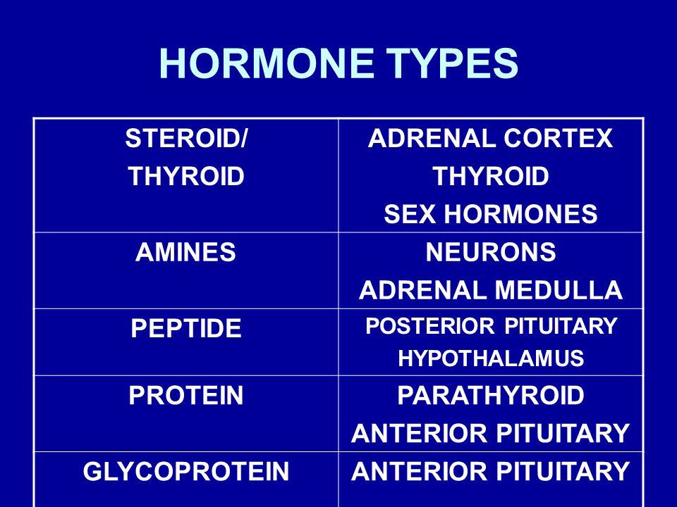 HORMONE TYPES STEROID/ THYROID ADRENAL CORTEX SEX HORMONES AMINES