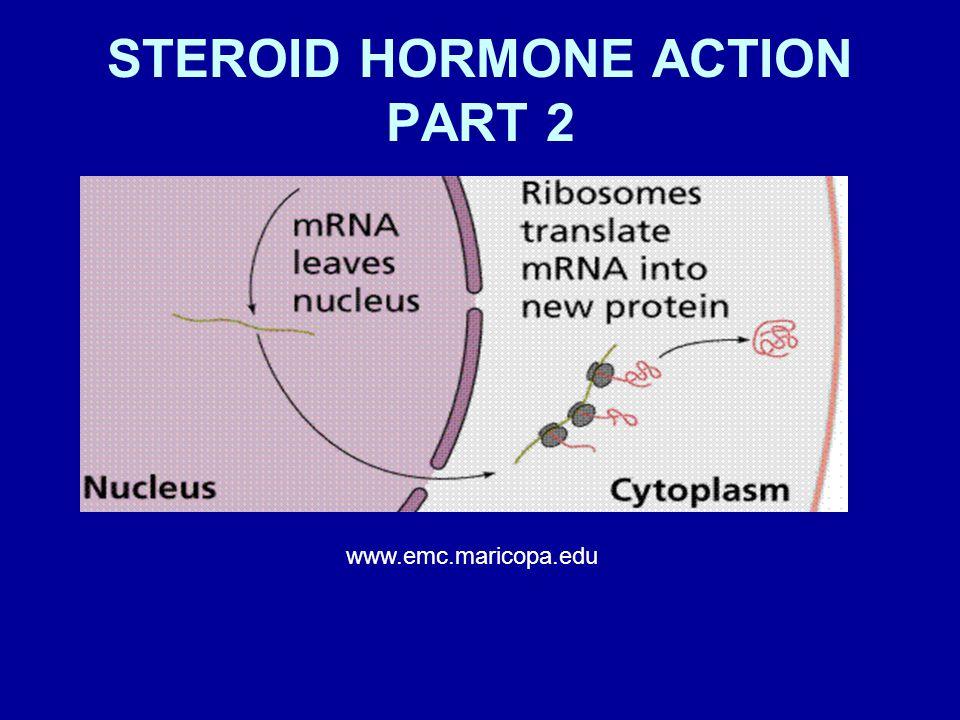 STEROID HORMONE ACTION PART 2