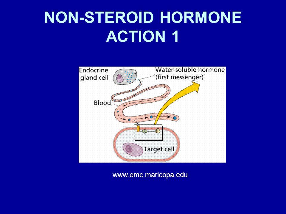NON-STEROID HORMONE ACTION 1