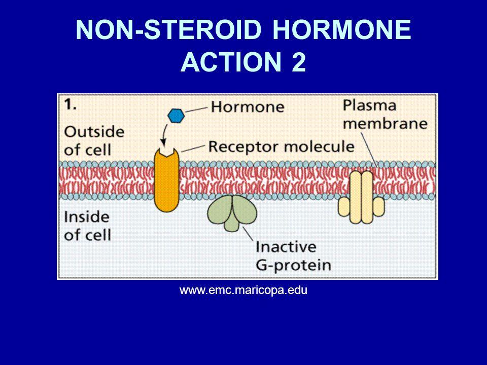 NON-STEROID HORMONE ACTION 2