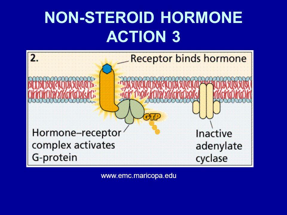 NON-STEROID HORMONE ACTION 3
