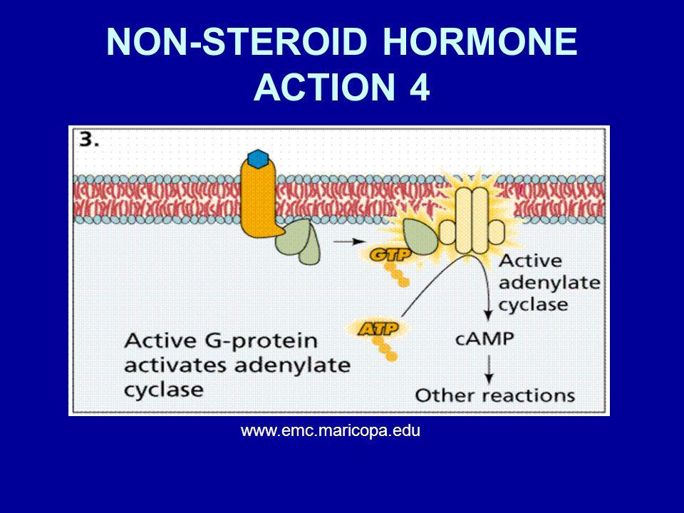 NON-STEROID HORMONE ACTION 4