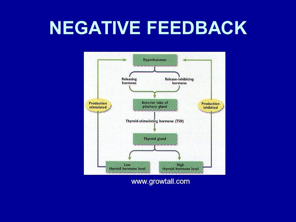 NEGATIVE FEEDBACK www.growtall.com