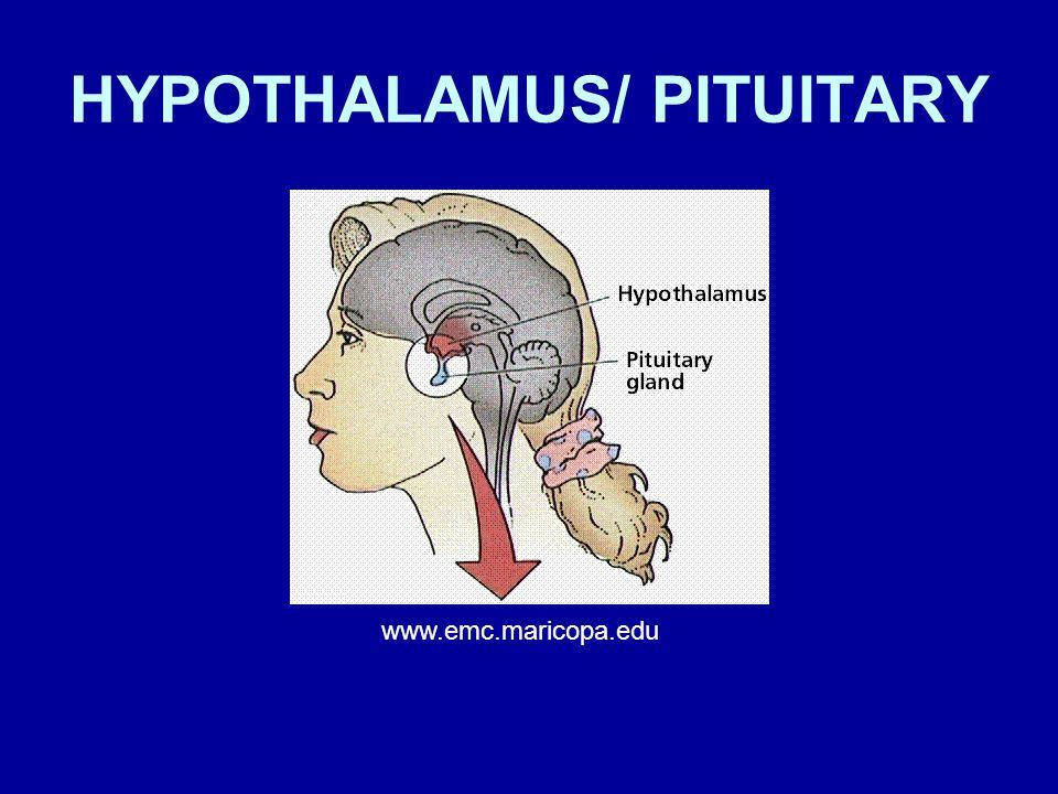 HYPOTHALAMUS/ PITUITARY