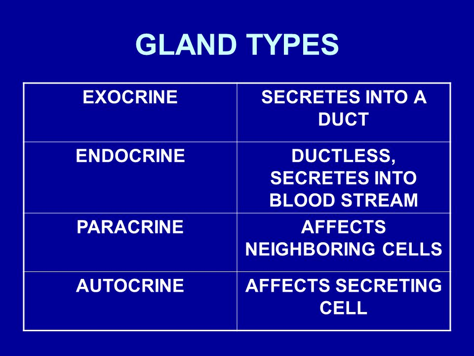 GLAND TYPES EXOCRINE SECRETES INTO A DUCT ENDOCRINE