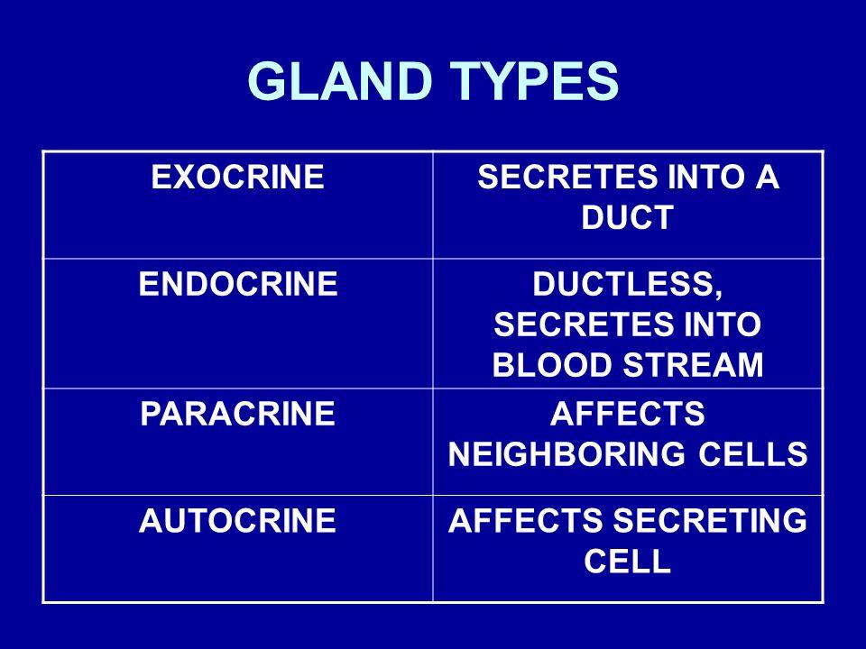 GLAND TYPES EXOCRINE SECRETES INTO A DUCT ENDOCRINE