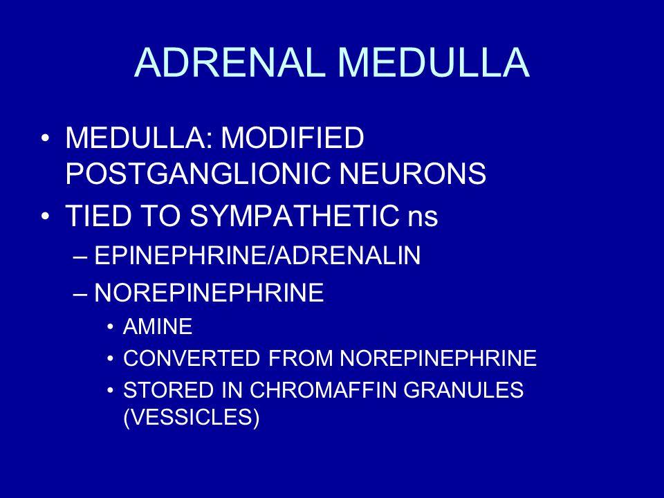 ADRENAL MEDULLA MEDULLA: MODIFIED POSTGANGLIONIC NEURONS