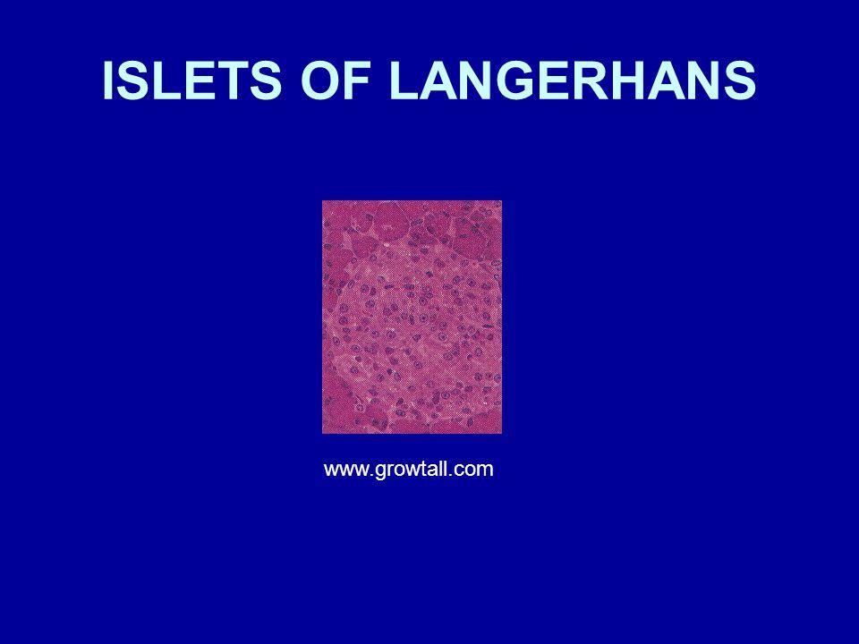 ISLETS OF LANGERHANS www.growtall.com