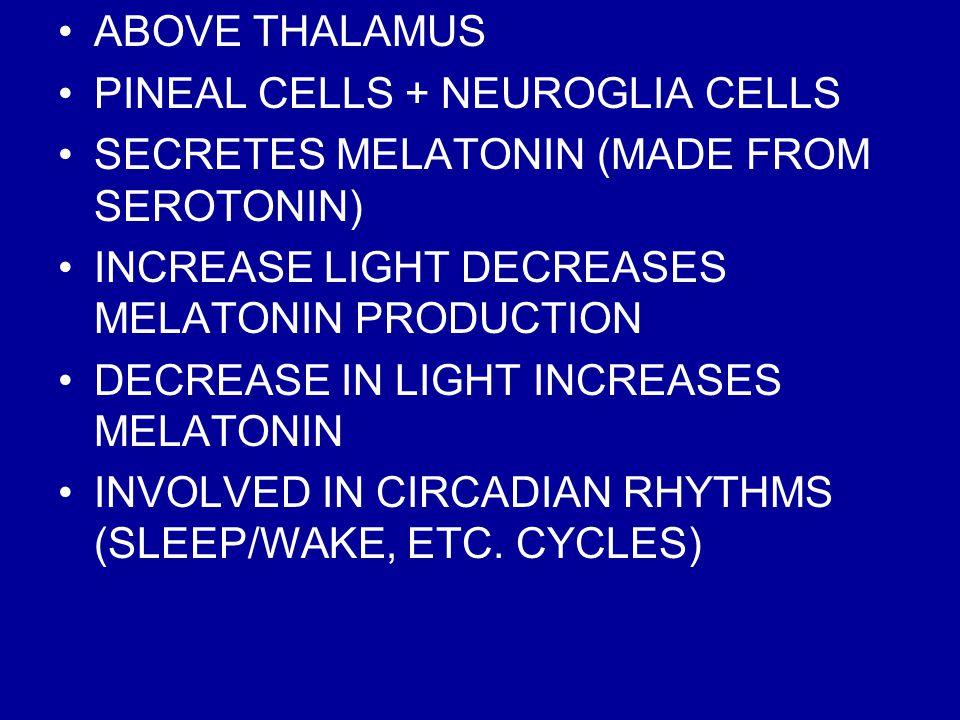 ABOVE THALAMUS PINEAL CELLS + NEUROGLIA CELLS. SECRETES MELATONIN (MADE FROM SEROTONIN) INCREASE LIGHT DECREASES MELATONIN PRODUCTION.