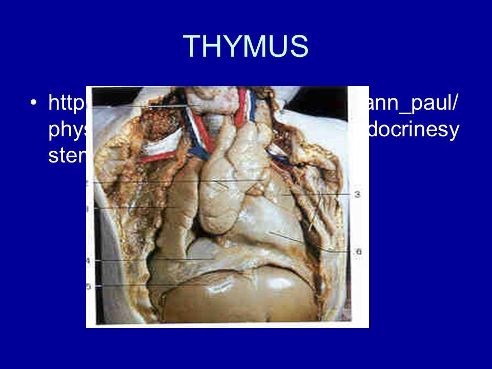 THYMUS http://homepage.smc.edu/wissmann_paul/physnet/anatomynet/anatomy/endocrinesystem.html