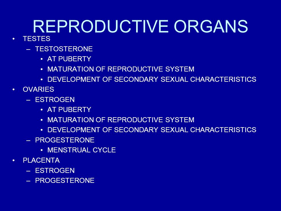 REPRODUCTIVE ORGANS TESTES TESTOSTERONE AT PUBERTY