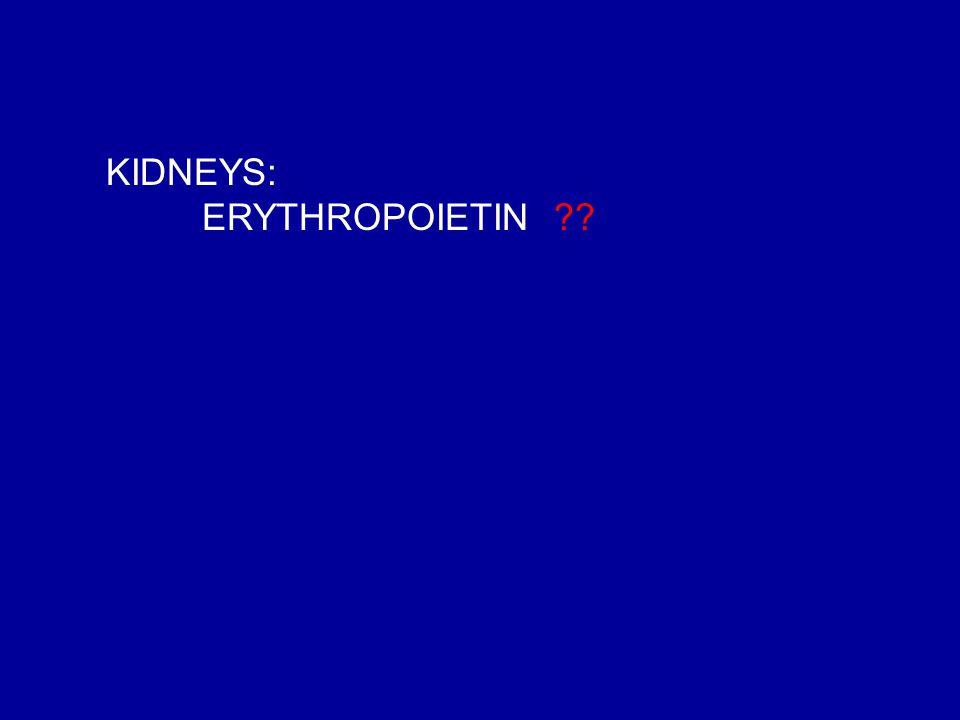 KIDNEYS: ERYTHROPOIETIN