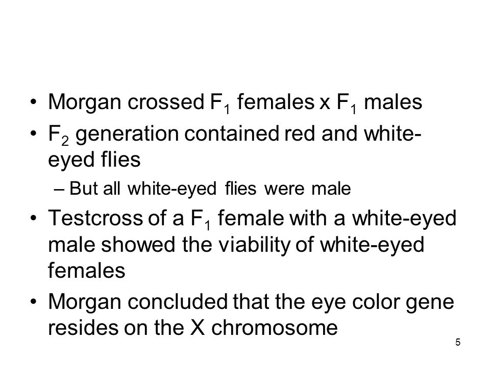 Morgan crossed F1 females x F1 males