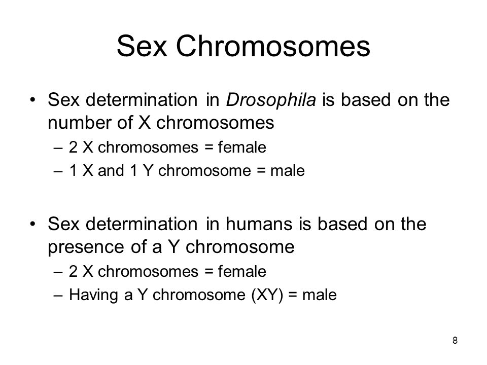Sex Chromosomes Sex determination in Drosophila is based on the number of X chromosomes. 2 X chromosomes = female.