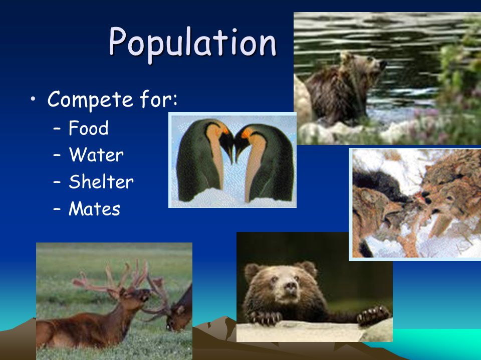 Population Compete for: Food Water Shelter Mates