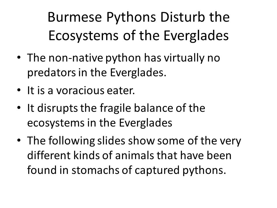 Burmese Pythons Disturb the Ecosystems of the Everglades