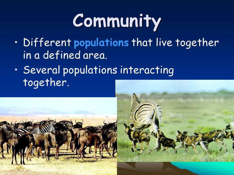 Community Different populations that live together in a defined area.