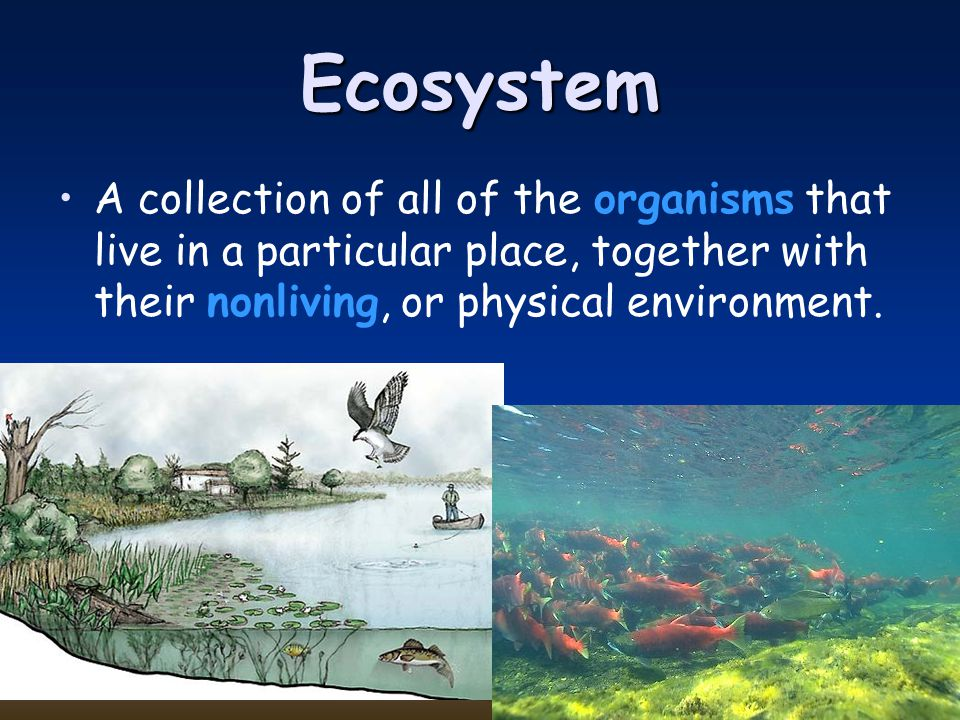 Ecosystem A collection of all of the organisms that live in a particular place, together with their nonliving, or physical environment.