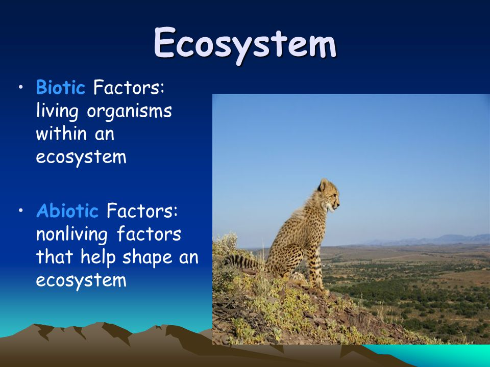 Ecosystem Biotic Factors: living organisms within an ecosystem