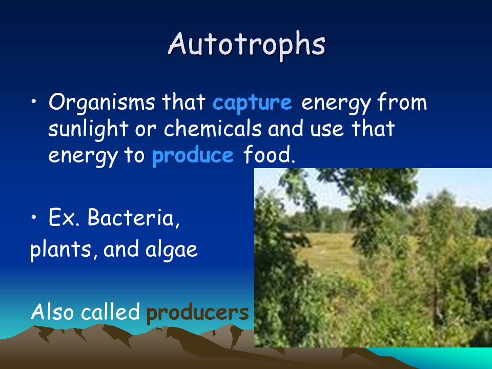 Autotrophs Organisms that capture energy from sunlight or chemicals and use that energy to produce food.