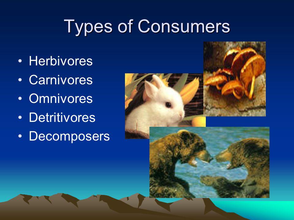 Types of Consumers Herbivores Carnivores Omnivores Detritivores