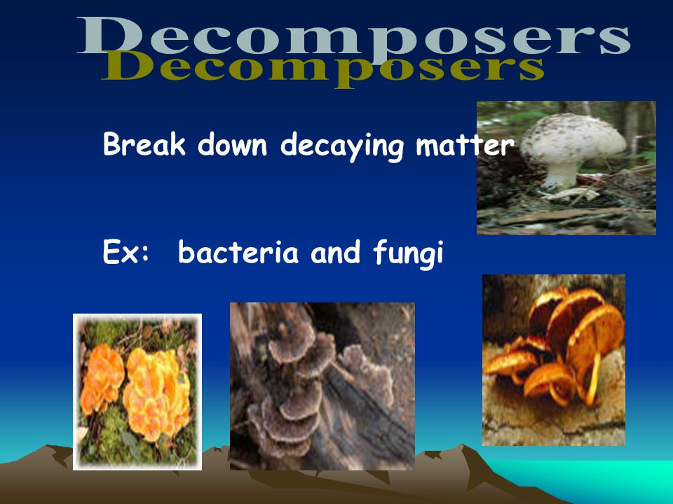 Decomposers Break down decaying matter Ex: bacteria and fungi 27